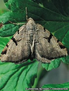 UK Moth Numbers Suffer Crash, 40-year Study Shows image #1