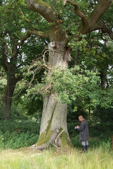 Woburn Abbey, Bedfordshire - Bat Surveys with Tree-Climbing image #1