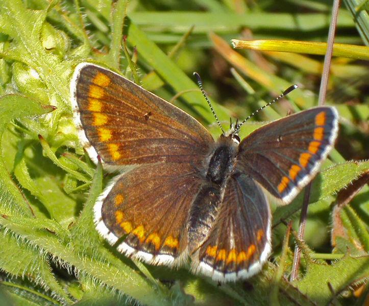 entomology windrush ecology