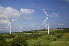 Windfarm Surveys