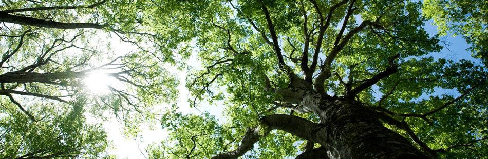 Bat Surveys of Trees