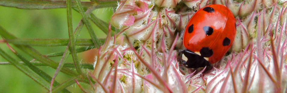 Invertebrate Surveys